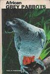 Picture of African Grey Parrots